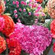 Blumen GB Pics