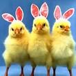 Lustiges zu Ostern