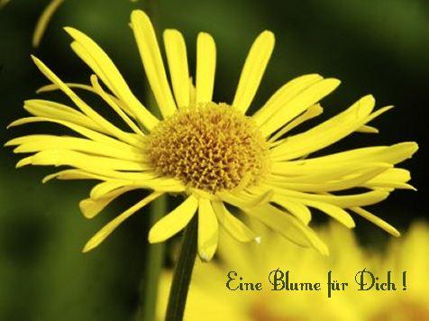 Eine Blume für Dich!