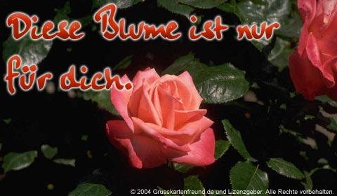 Blumen für Dich bild 5