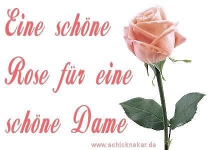 Eine schöne Rose für...