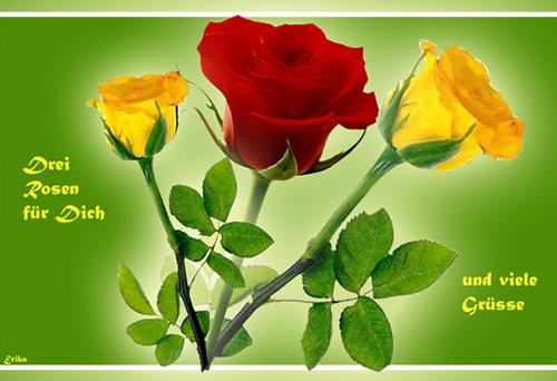 Drei Rosen für Dich und viele Grüße.