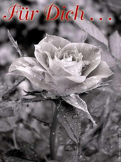 Blumen für Dich bild 8
