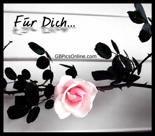 Blumen für Dich bild