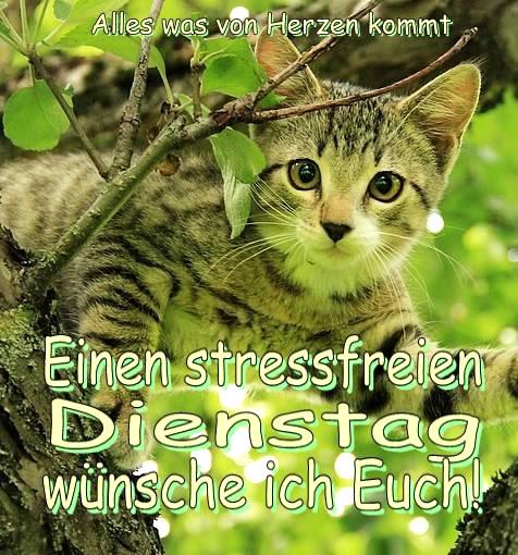 Einen stressfreien Dienstag wünsche ich...