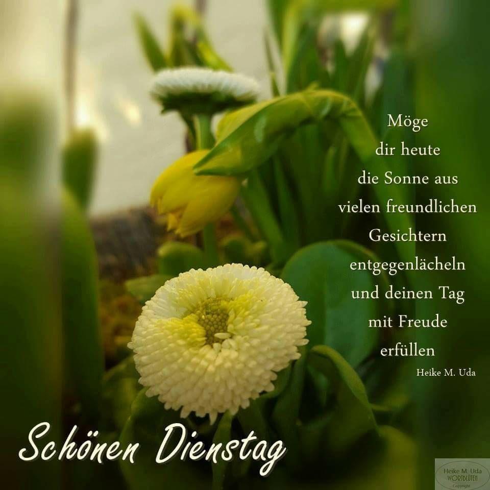Möge dir heute die Sonne aus vielen freundlichen Gesichtern entgegenlächeln und deinen Tag mit Freude erfüllen. Schönen...