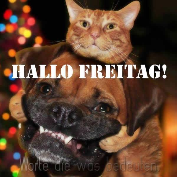 Hallo Freitag!
