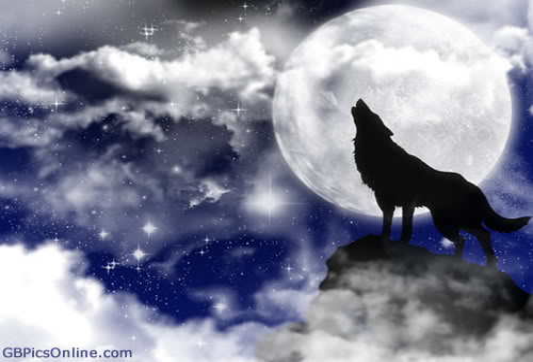 Wölfe bild 7