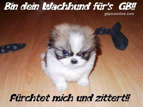 Bin dein Wachhund für's GB!!! Fürchtet mich und zittert!!