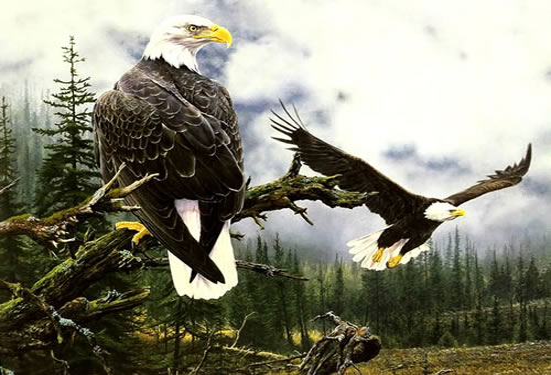 Der Forst der Adler