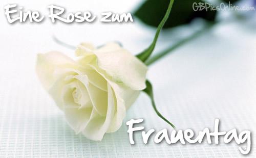 Eine Rose zum Frauentag