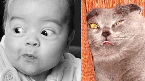 Tier Doppelgänger bild 7