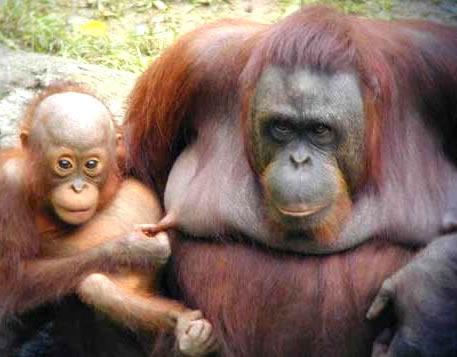 Das muss doch auch einem Affen...