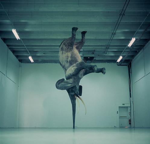 Der akrobatischste Elefant der...