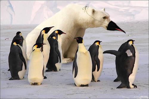 Eine Horde Pinguine, sonst...
