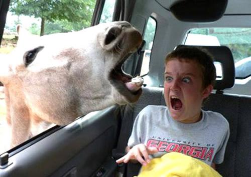 Lustige Tiere bild 10
