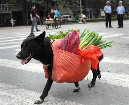 Gesundheitsbewusster Hund...