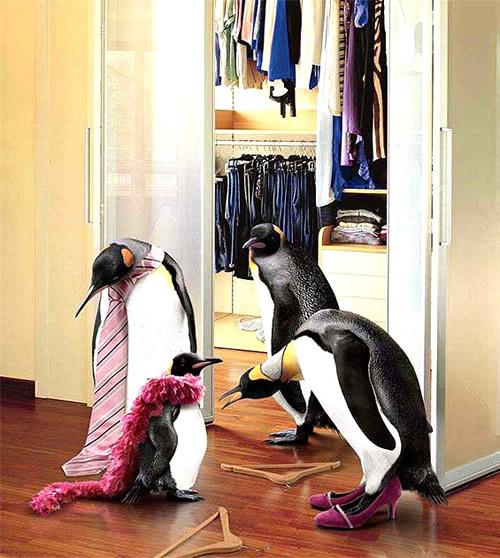 Pinguine beim Ankleiden