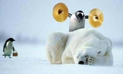 Pinguinen terrorisieren einen...