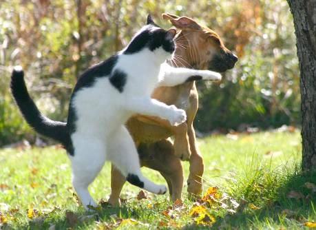 Hund bekommt einen Upper-Cat...