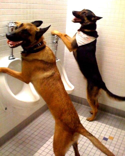 Hundebuddys haben Spaß auf der Toilette