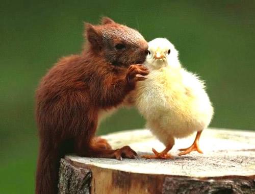 Eichhörnchen hat Bock auf Hähnchen... ohne den ganzen Aufwand