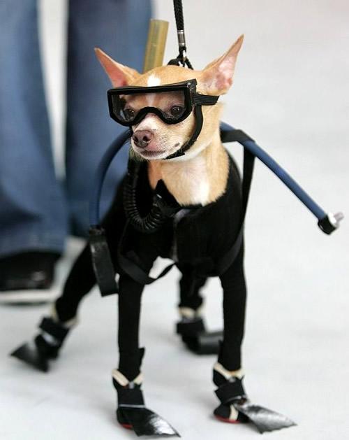 Hund ist bereit für den Tauchgang