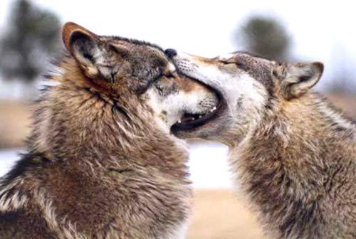 Wenn der erste Kuss mal so richtig daneben geht