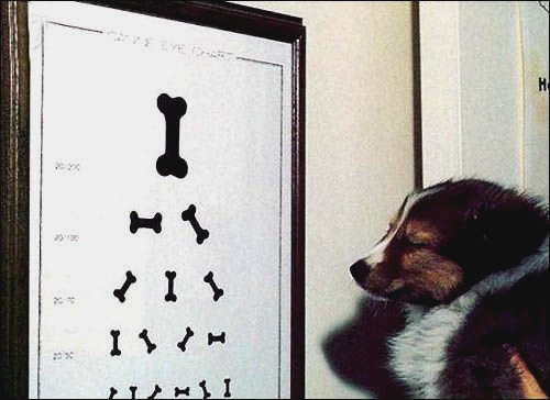 Hund beim Augenarzt