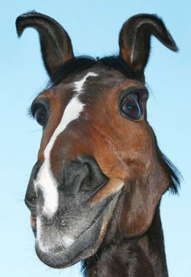 Pferd macht eine lustige Grimasse