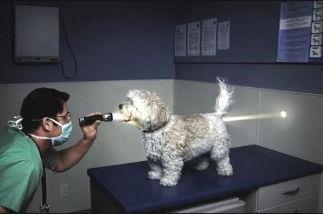 Tierarzt hat Taschenlampe mit...