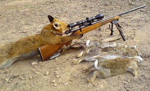 Klischee des schlauen Fuchs'...