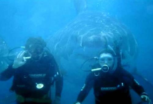 Hai ist leidenschaftlicher...