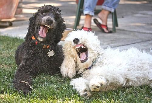 Zwei Hunde hecken einen...