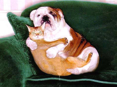 Hund und Katze werden auf...