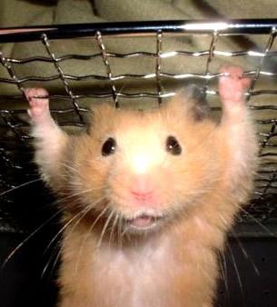 Hamster trainiert im...