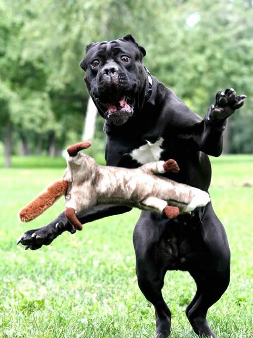 Großer schwarzer Hund...