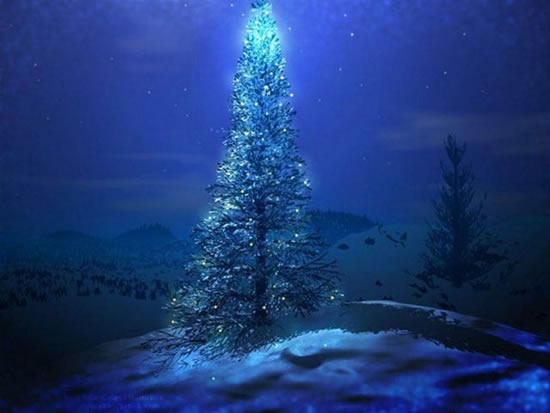 Weihnachtsbaum im Mondschein