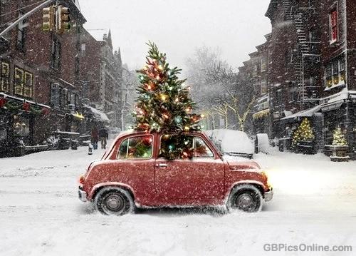 Der Weihnachtsbaum und der Kleinwagen