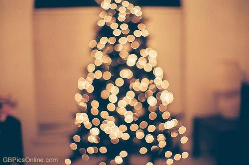 Weihnachtsbaum bild 6