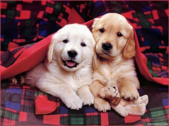 Hunde bild 2