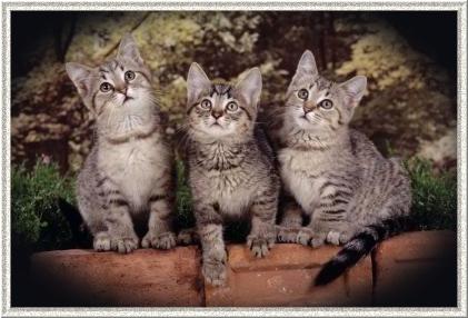 Drei neugierige Katzen