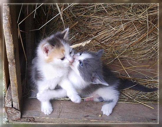 Katzen bild 2