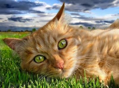 Katzen Bilder Katzen Gb Pics Gbpicsonline