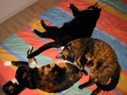 Katzen-Trio schläft auf bunter Decke