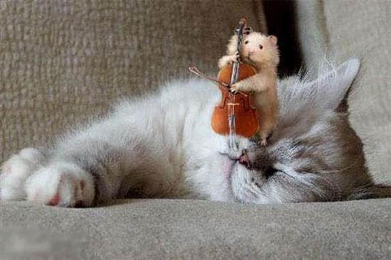 Maus spielt Kontrabass auf der Nase einer Katze