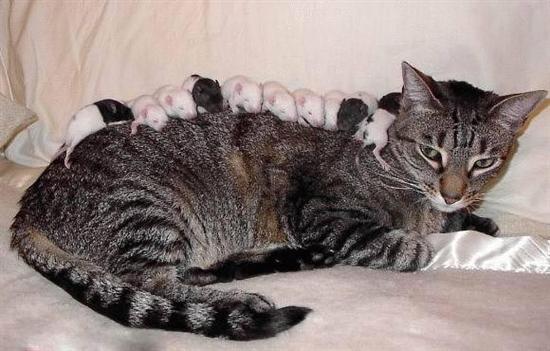 Katze wird als Schlafplatz für Mäuse missbraucht