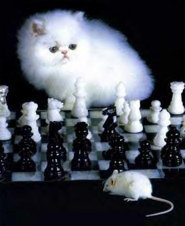 Katze gegen Maus - Das Schachduell
