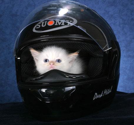 Katze versteckt sich im Motorradhelm