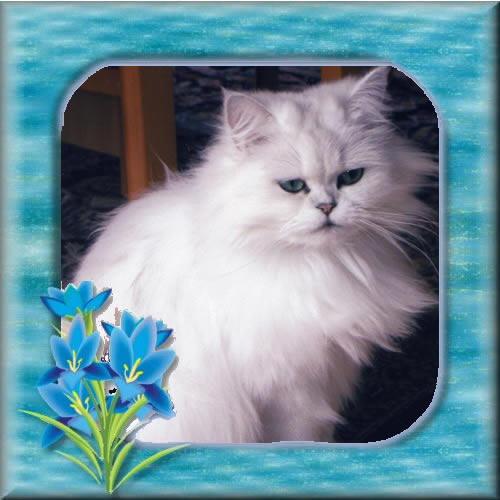 Blau und floral umrahmte Katze